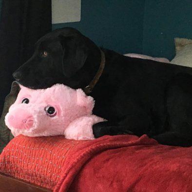 Jonah and his stuffed Piggy